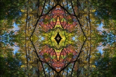 Ecstatic Camouflage: Appalachian Old Growth (2012)