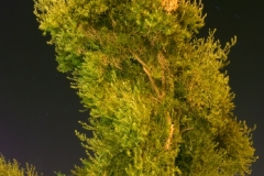 Artificial Night Lighting (2012)
