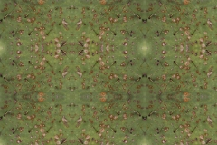 Opuntia Maps (2014)