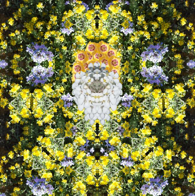 beard-of-flowers