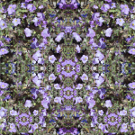 purple-flowers_web
