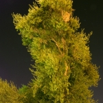 Night-Lighting-Tempe-Limb-1