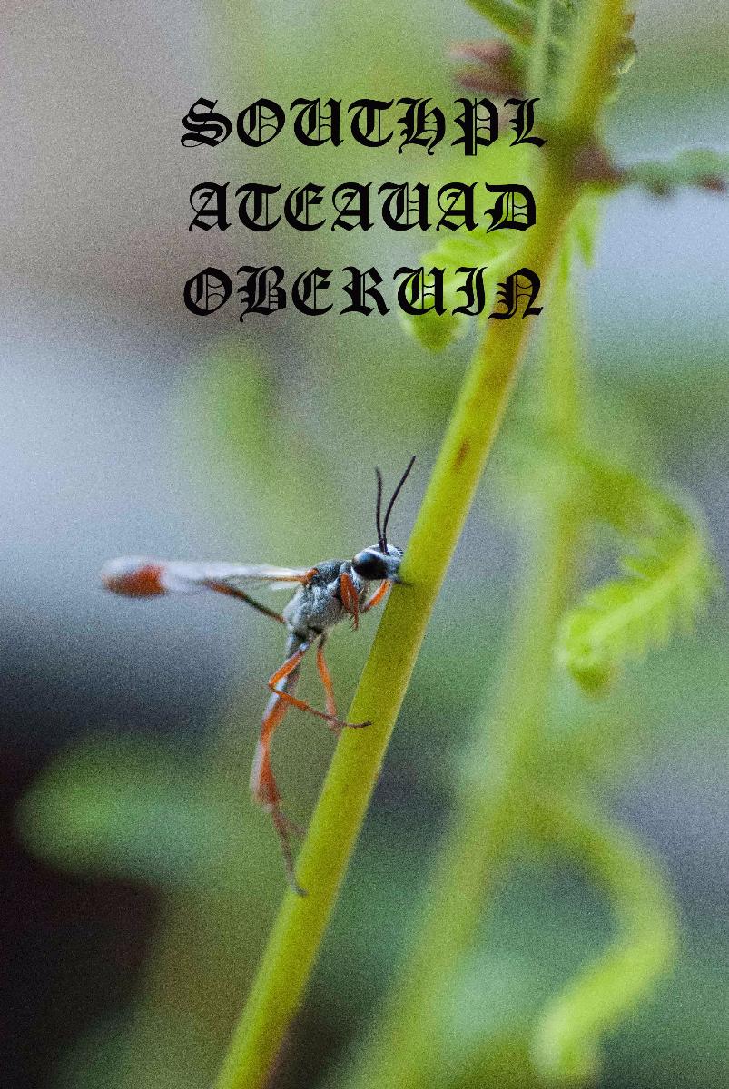spar-wasp-small